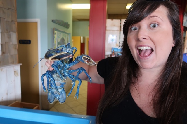 Cailin holding a bright blue lobster at Captain Kats lobster shack in Barrington, Nova Scotia