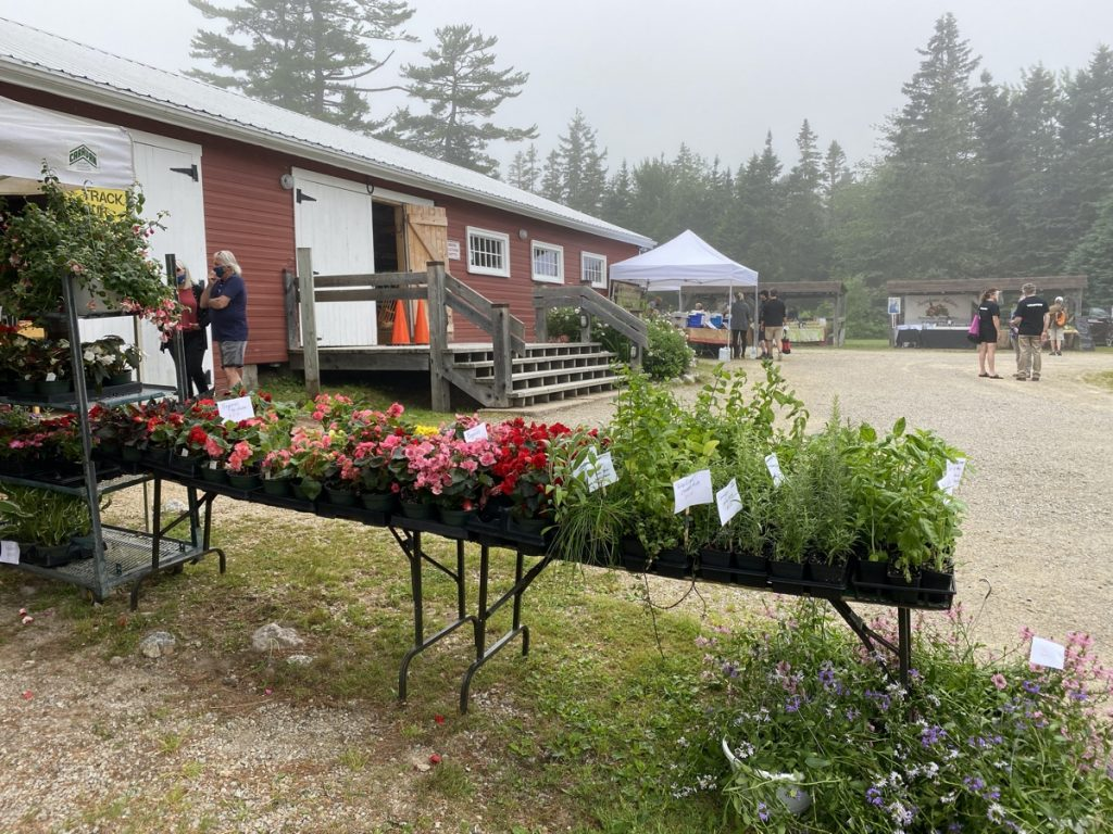 a misty morning at the Hubbards Barn Farmers Market in Hubbards Nova Scotia