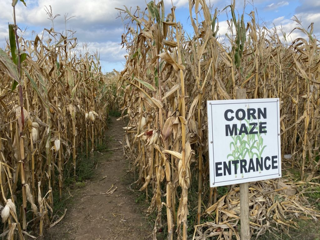 get lost in a corn maze in the fall in the annapolis valley