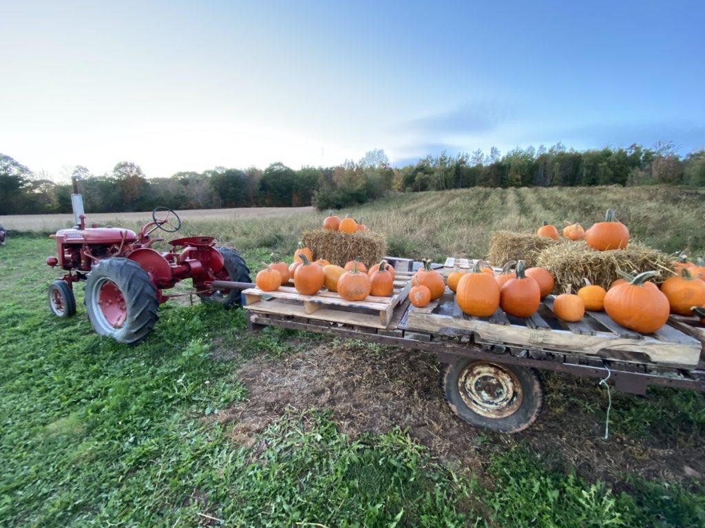 pumpkin u pick in the annapolis valley