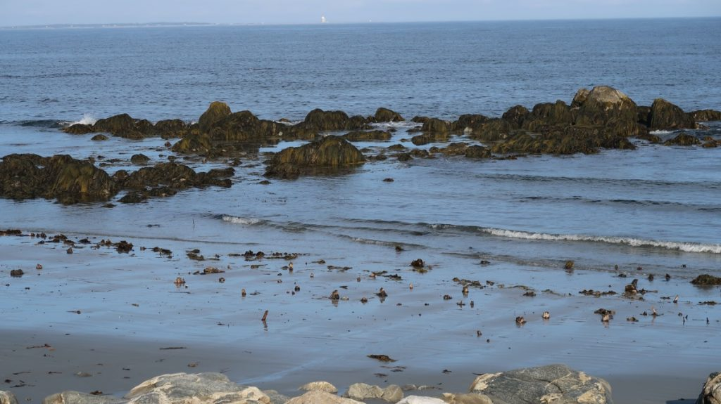the hawk beach ancient petrified drowned forest on cape sable island barrington shelburne county nova scotia